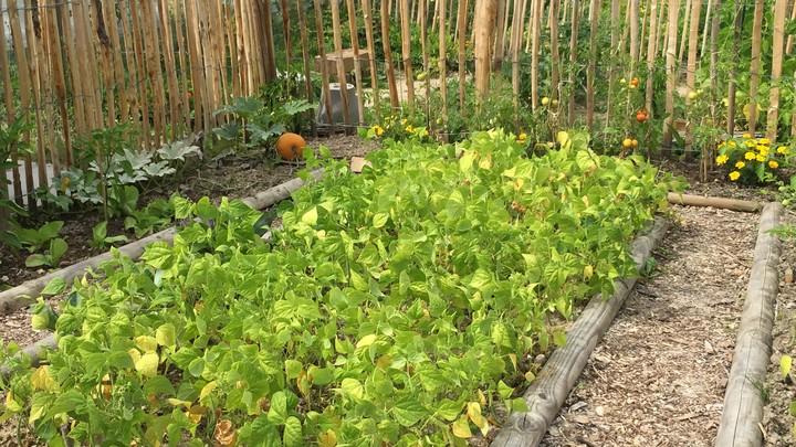 Jardins familiaux site des Platrières 8