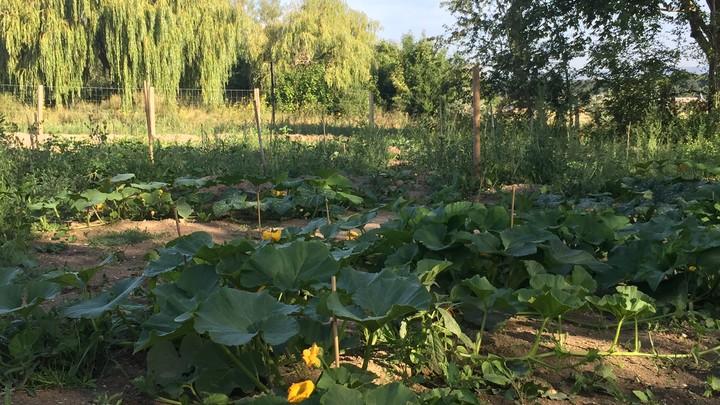 Jardin partagé vue 2