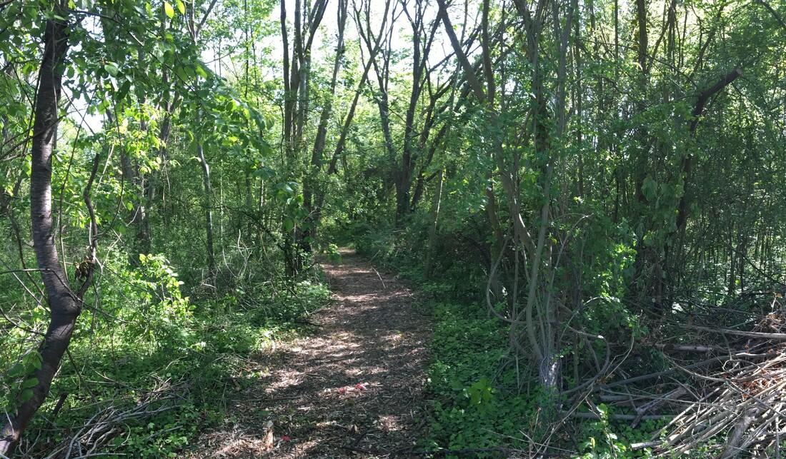 Espace naturel sensible - bois