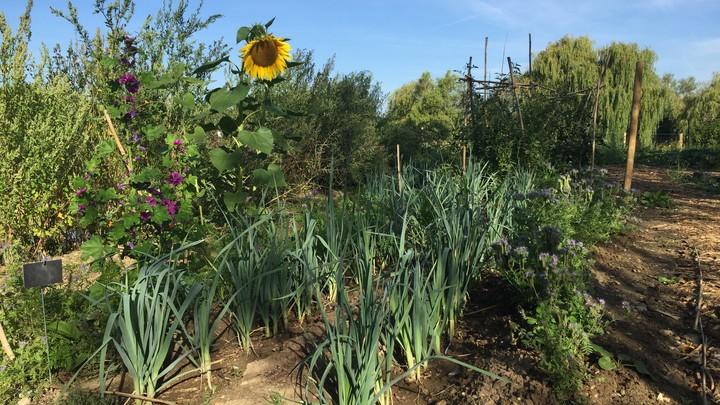 Jardin partagé vue 4