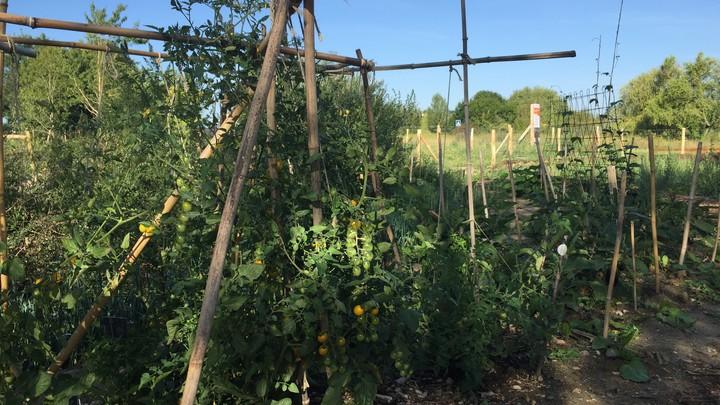 Jardin partagé vue 5
