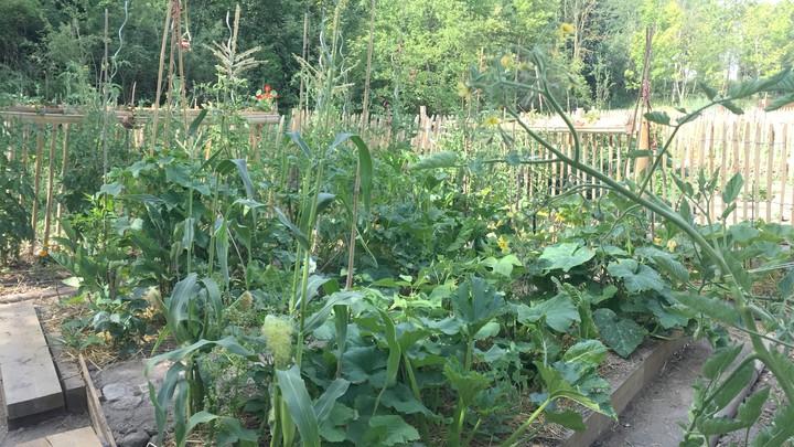 Plantations en permaculture