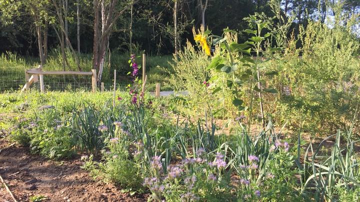 Jardin partagé vue 3