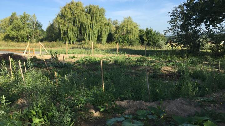 Jardin partagé vue 1
