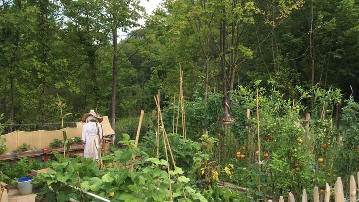 Jardins familiaux site des Platrières 6